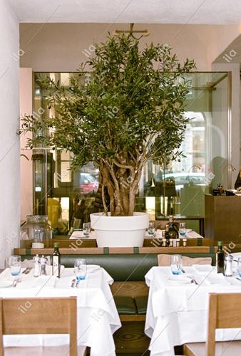 Olive Robusta 200 cm Green